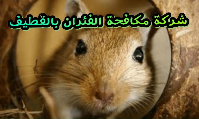 شركة مكافحة الفئران بالقطيف 0531390740