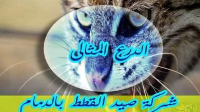 Photo of شركة صيد القطط بالدمام 0533766855