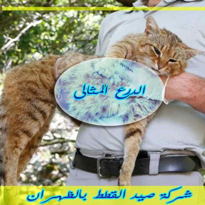 شركة صيد القطط بالظهران