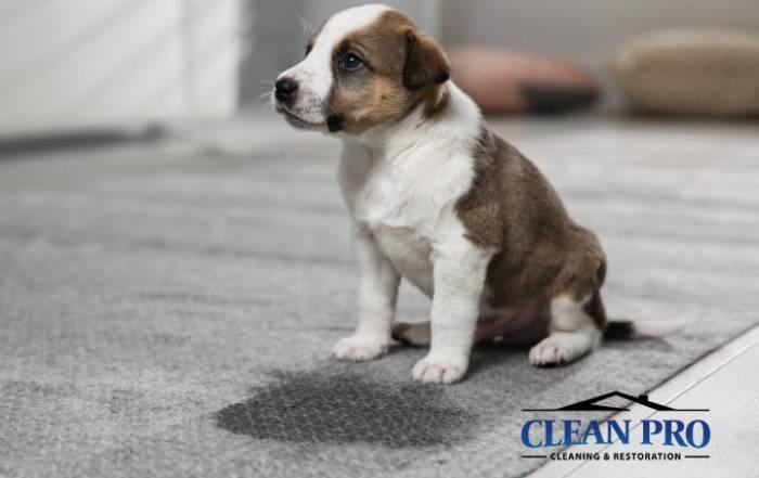 Clean Pro Pet Urine