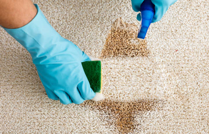 Clean Pro Services Carpet Cleaning