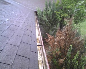 professional gutter cleaners