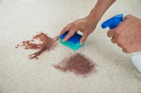 Martha Stewarts Ultimate Guide to Carpet Stain Removal