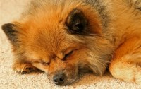 How to Remove Dog Urine Smells from Your Carpet Knoxville ...