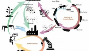 plastic bioplastic waste reduction circular economy