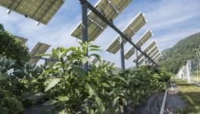 Solar panels farms