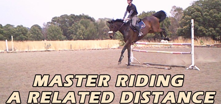 Master a related distance in showjumping