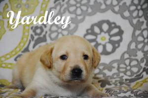 Yardley 4 weeks.