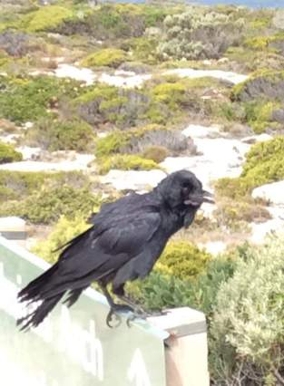 Rook that talked to me on the way to the coach when I kept everyone waiting! oops