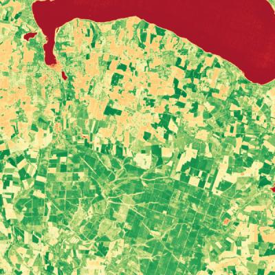 Vegetation (NDVI)