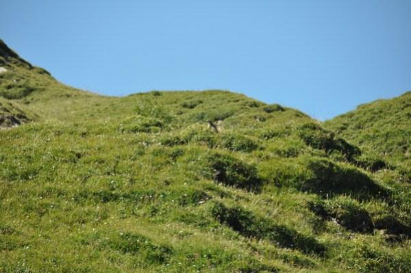 Alpes-2012 0941