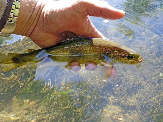 Petite rivière et gros poisson