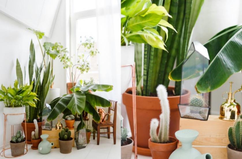 bien choisir sa plante d 39 int rieur clem around the corner. Black Bedroom Furniture Sets. Home Design Ideas