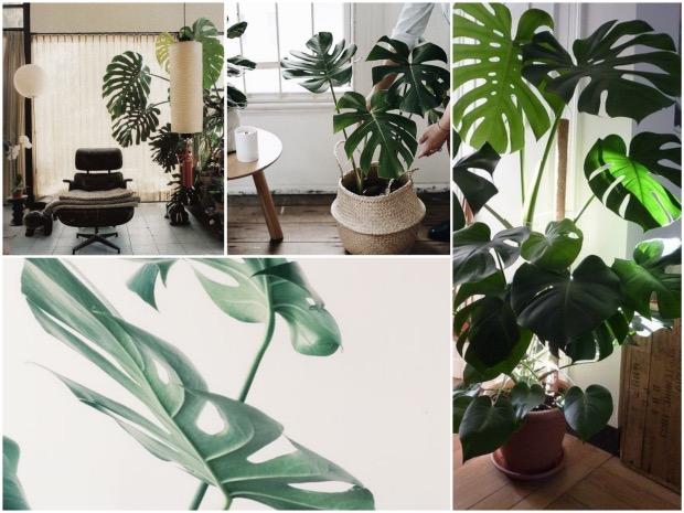 Bien choisir sa plante d'intérieur - Clem Around The Corner
