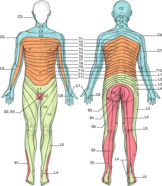 2 rappel anatomique medicine key. Black Bedroom Furniture Sets. Home Design Ideas