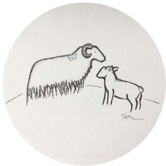 Sheep & Lamb