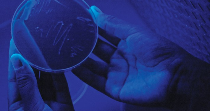 A sample of the Legionella Clemsonensis bacteria under a ultraviolet light. The bacteria can be seen as small glowing dots in the 12-o-clock area of the petri dish.