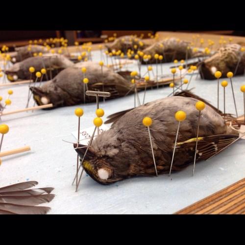 Museum Specimen Preparation
