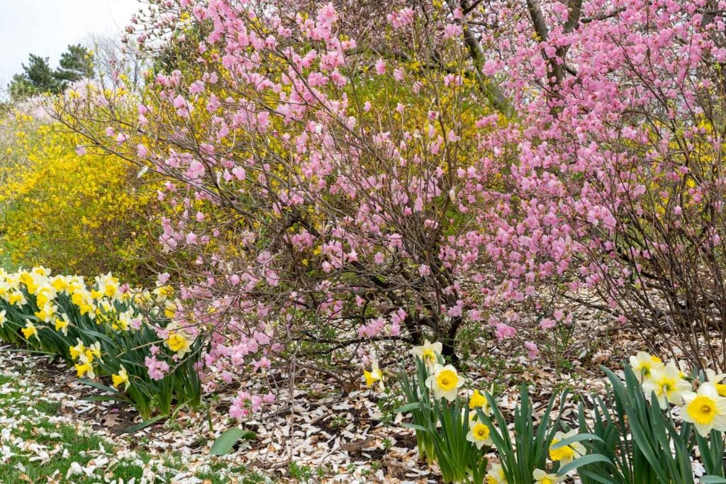 Spring blooms at Lake View Cemetery