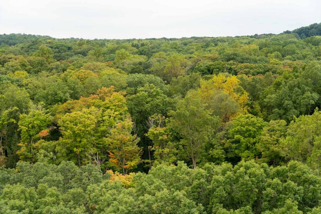 View from the Emergent Tower at Holden Arboretum