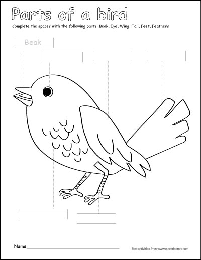 Label and color the parts of a bird