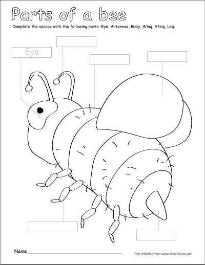 Colour the parts of the bee
