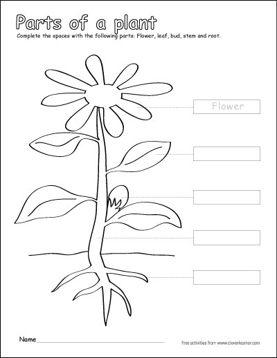 Label and color the parts of a plant