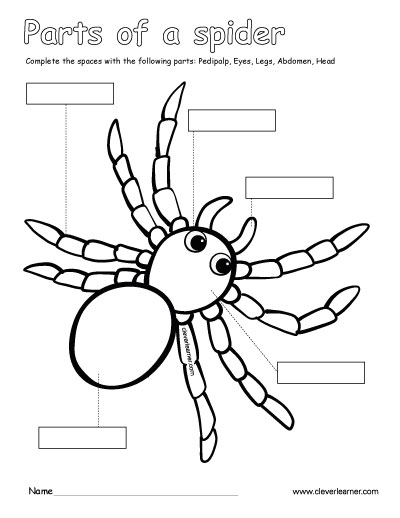 Body Shape Coloring Pages
