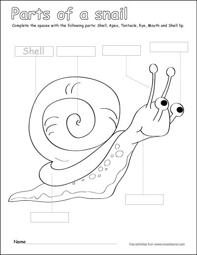 Label and color the parts of a snail