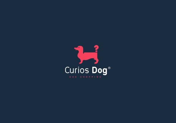 Curios Dog by Jon Ademaj