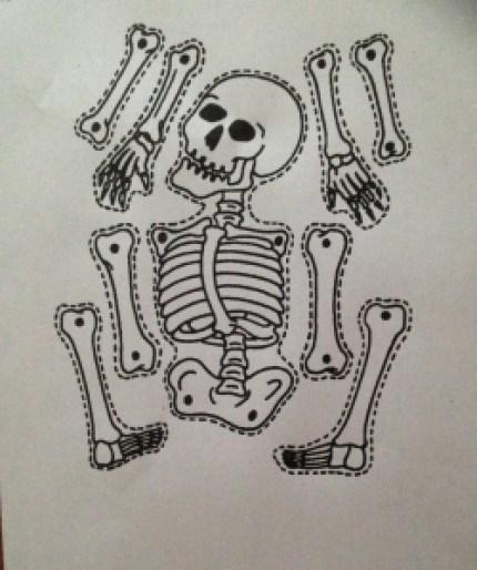 Printable Bones Worksheet - Human Body for kids