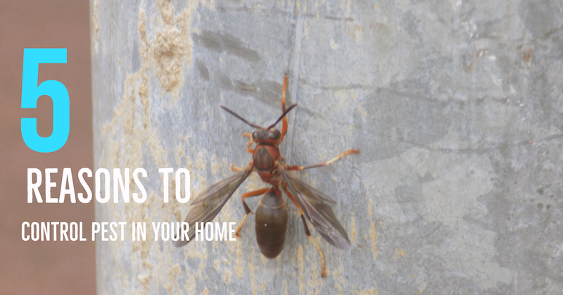 5 reasons to control pest in your home