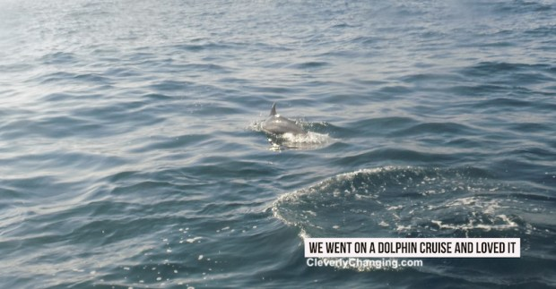 We Went on a Dolphin Cruise and Loved it near Newport Beach | Dolphin fin swimming in the ocean