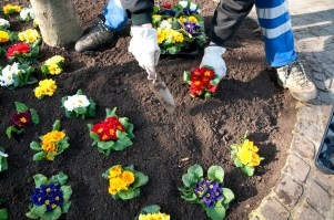 ...a time for planting... Photo: Anje Kirsch