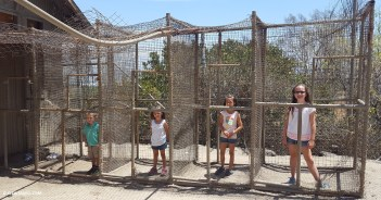 The kids in monkey cages