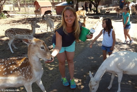 deer_farm_brooke_feeding