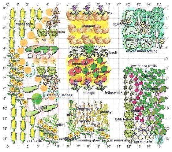 companion planting design