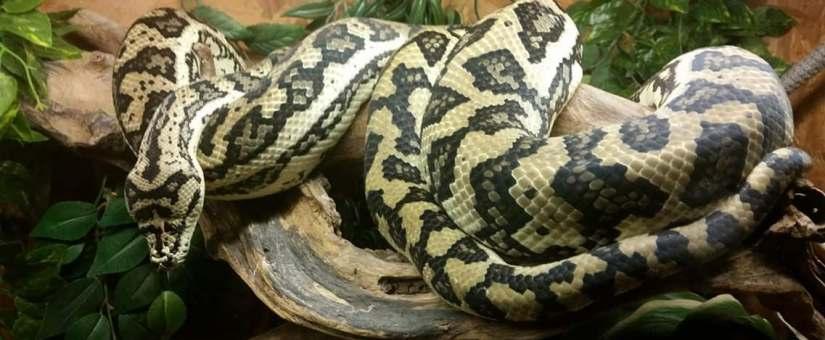 Atelier du CLIC #3 la photo avec des reptiles