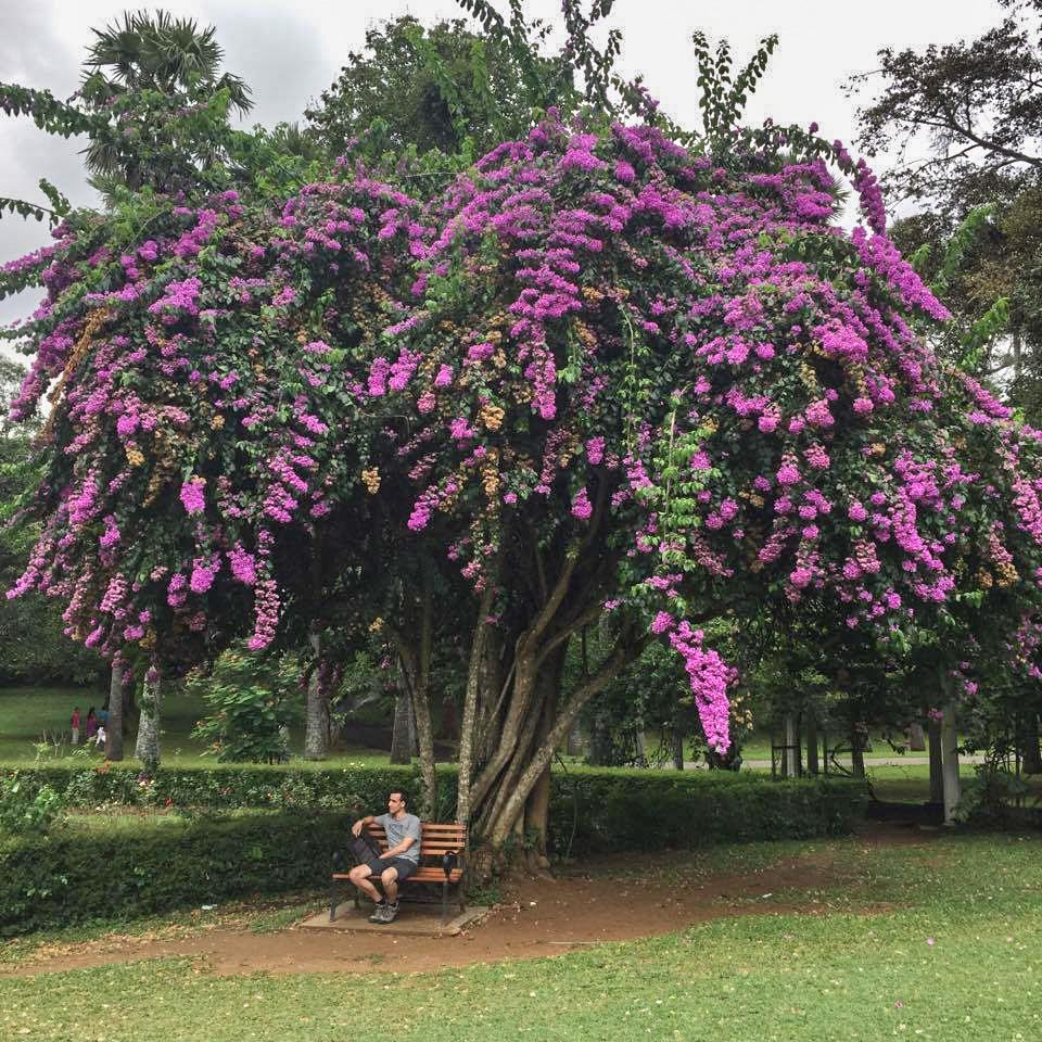 Peradeniya Gardens - Kandy (10)_edited