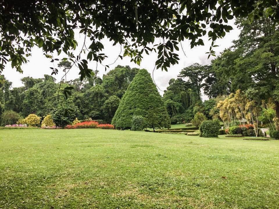 Peradeniya Gardens - Kandy (4)_edited