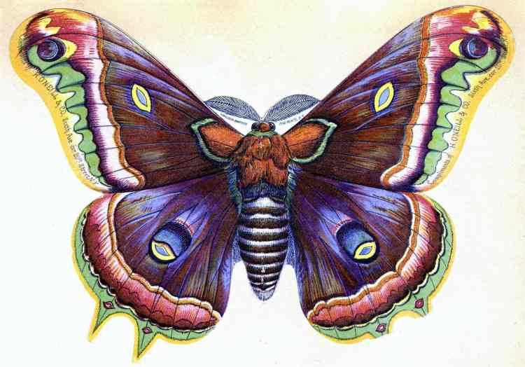 Big beautiful butterfly - Perspectives on our place in time from 1894