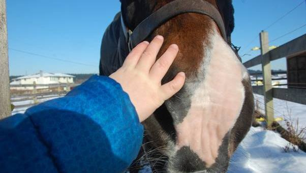 5 Tips to Improve the Bond with Your Horse