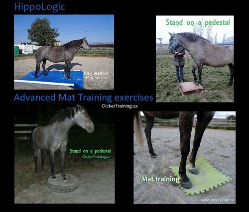 _advanced_mat_training_hippologic