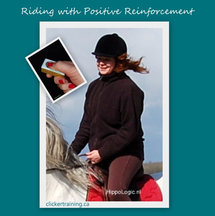 riding positive reinforcement clickertraining hippologic