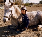 Trick Training Teach your horse to Lie Down