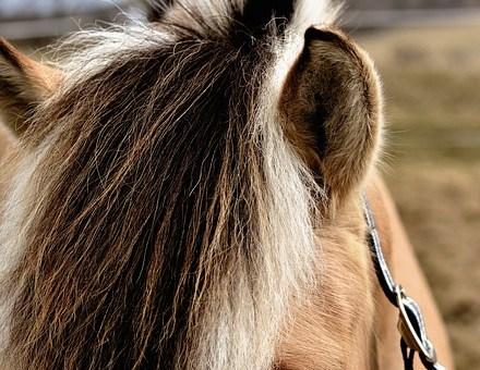 Shaping Plan for Haltering in 3 Steps (Clicker Training Horses)