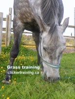 stop grazing_hippologic clickertraining academy grass training leading on grass2