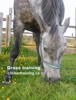 stop grazing_hippologic clickertraining academy grass training leading on grass2.jpg