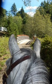 Enjoy trail rides again after grass training