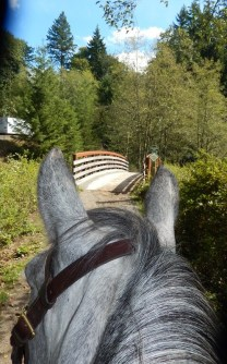 Enjoy trail riding without unsolicited snacking on leaves